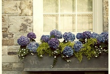 Window Boxes / by Robin Griffin