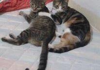 Nuestros gatos ❤