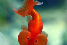 Lovely Fish :*