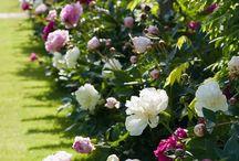 Blommor & Växter
