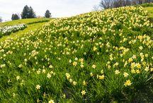 Spring Garden / Winterthur Garden, early spring 2015