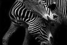 animalitos
