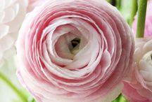 Flowers [n]