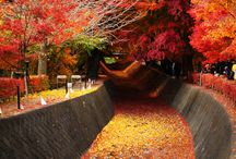 Autumn -Love it; Miss it