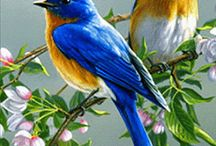 pássaros-imagens