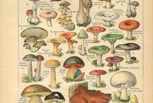 Mushroom Reference