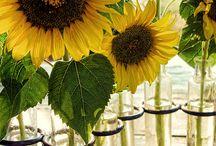 Flowers/succulents/my garden!