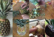 huerta plantas