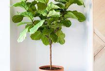 Plantes d'intérieur