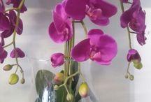 orchid sklep