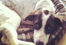 Keira, The Dog