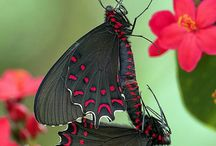 Schmetterling 29