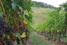 Pics of Beautiful Vineyards / by Lisa Comeaux