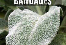 Anti bacterial bandage Lambs ears