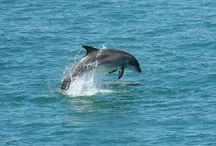 delfiny i świat podwodny