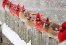 Birds beauty