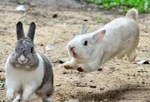 Bunny & Co.
