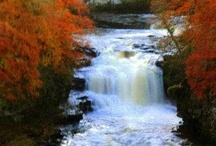 Falls of Clyde / New Lanark is home to the fantastic Falls of Clyde Wildlife Reserve