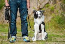 Übungen mit Hund
