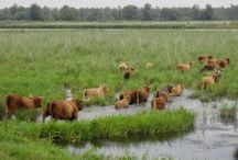 4xwijzer dieren in Nederland /natuur om je heen