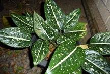 Foliage / Foliage for arrangement