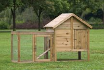Chickens / Chicken Coops, How-to
