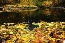 Autumn Colors / by Patrizia Anselmi