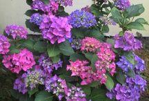 Virágaim/fotóim/