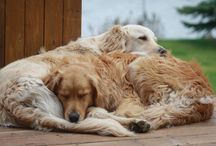 Dogs / by Judy Newman