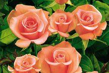 Judit csodás virágai képei