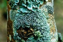 Textures nature