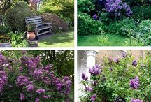 garden & šeřík