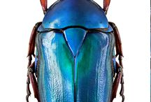 Biodiversity + insects