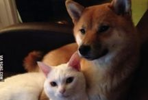 Animals who shouldn't be friends