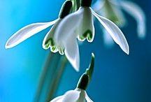 Mijn favo bloemen!