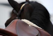 Tumblr horse photography