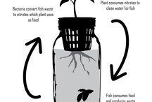 Fish Plant Jar