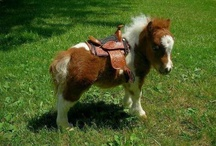 Mini horses <3 / by Rosann Burch Cox