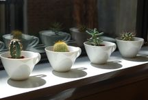 terrariums |  succulents | deco projects / by barbmia