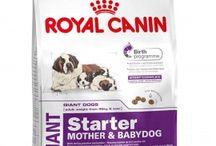 Buy #Royal_Canin Giant #Starter 4Kg