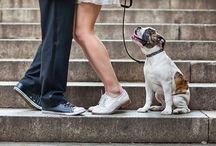 fotos com cachorro