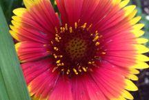Seen in my garden / Garden