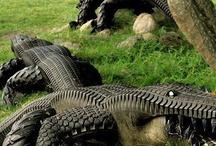Projekty do wypróbowania / Krokodyl gumowy