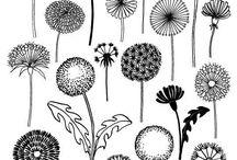 Dibujo de flores, hojas, cactus