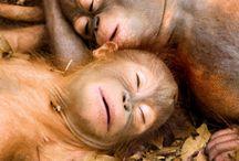 love monkey *-*