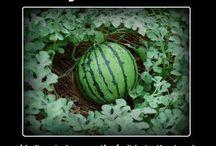 gardening!!!