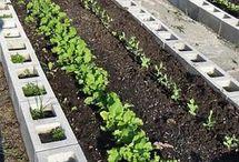 groenten/fruit verbouwen.