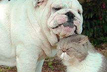 "ADORABLE ENGLISH BULLDOG & HIS BUDDIES ""THE CAT"""