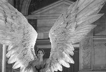 All things wings