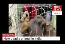 Deadliest creature caught in Kerala Karnataka border